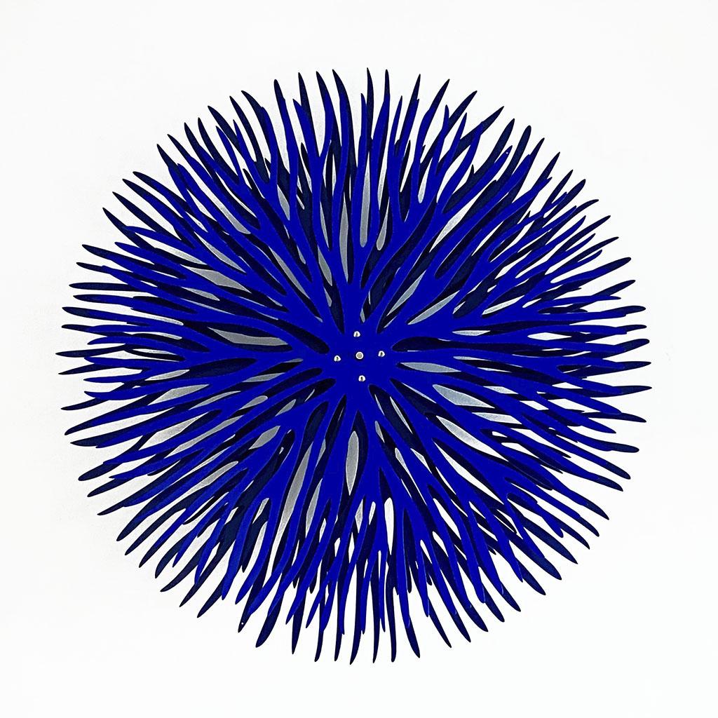 www sea urchin iph